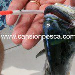 metralleta-2-peces-pluma-sumo-cicerello-01
