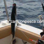 metralleta-2-peces-pluma-sumo-cicerello-02