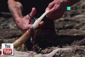 Vídeo como presentar pata de pulpo como cebo por Pepín Lubina